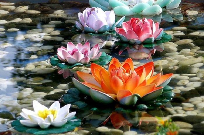 significado de la flor de loto por colores
