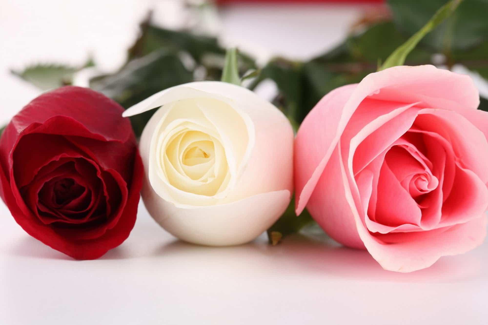 soñar con rosas