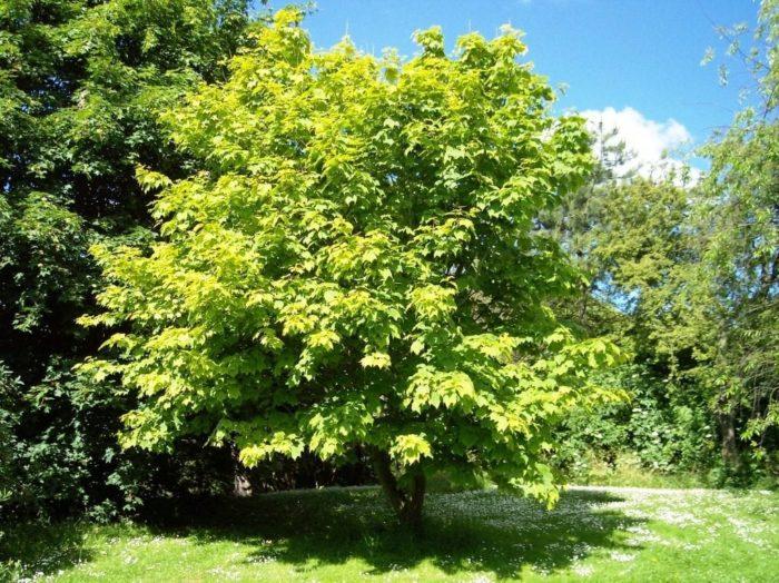 Arboles frondosos de poca raíz