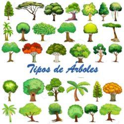 Tipos de árboles: Características, Hojas, Formas y más