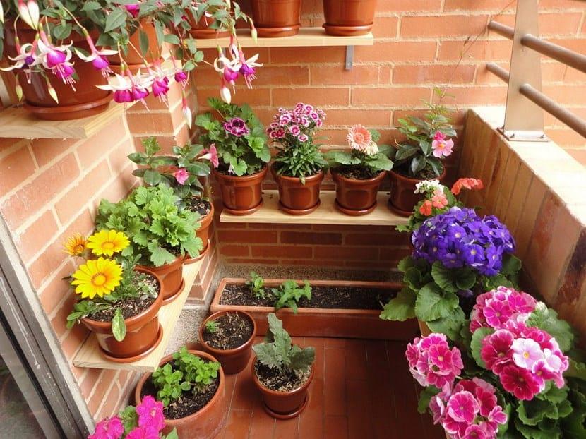plantas-de-exterior-resistentes-al-frío-y-al-calor