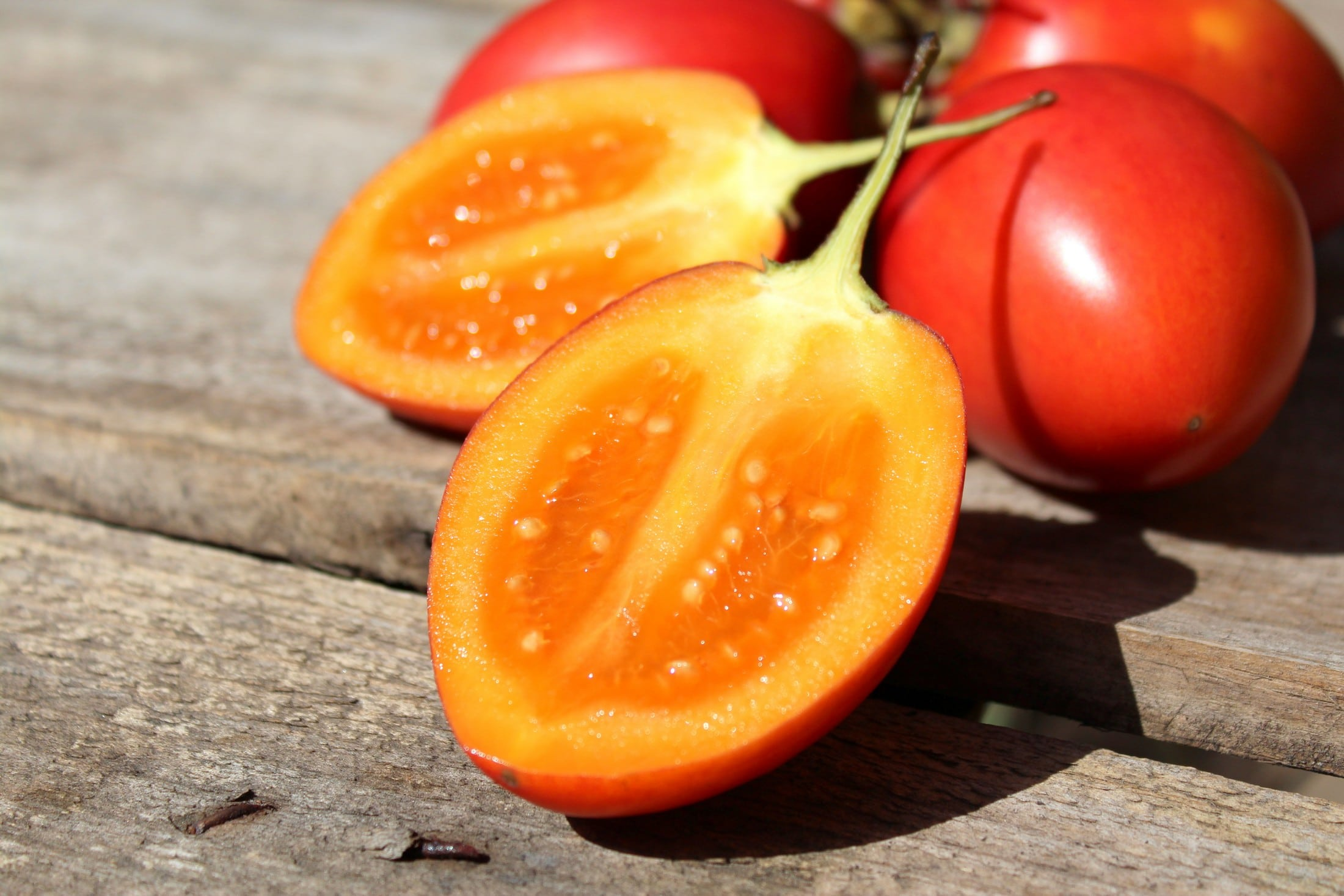 Tomate-de-árbol-6