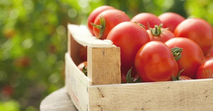 Abono para tomates 1