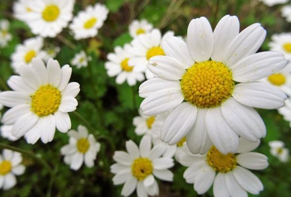 Plantas-aromáticas-2