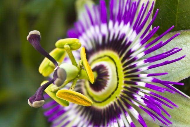 Plantas trepadoras con flor 2