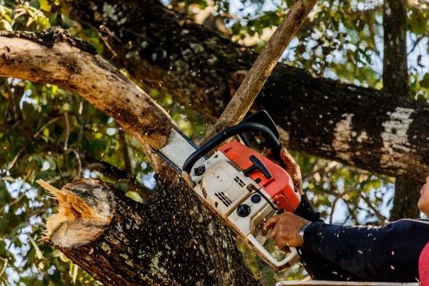 como-cortar-árbol-con-motosierra